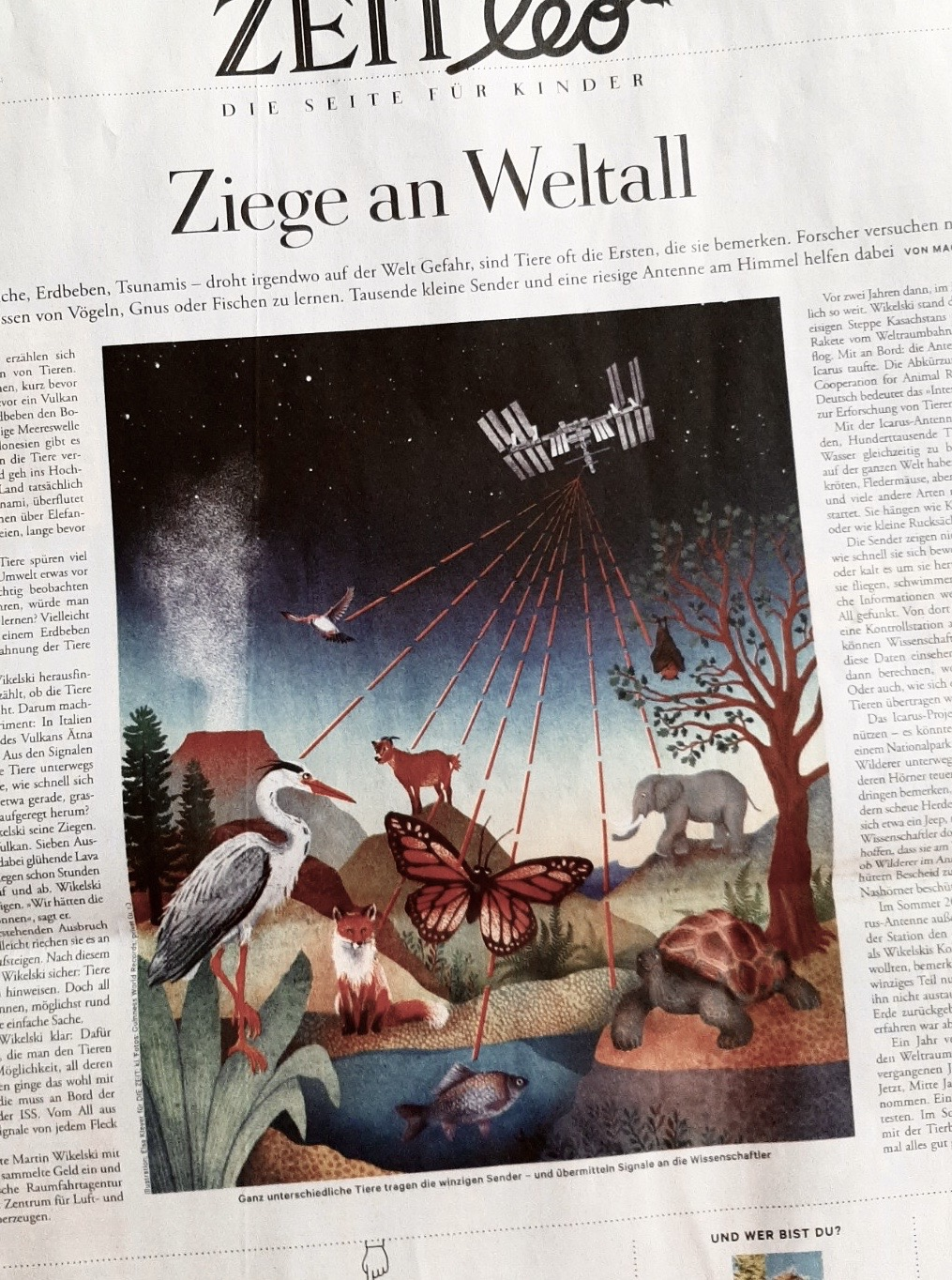 Elsa Klever Illustration Die Zeit